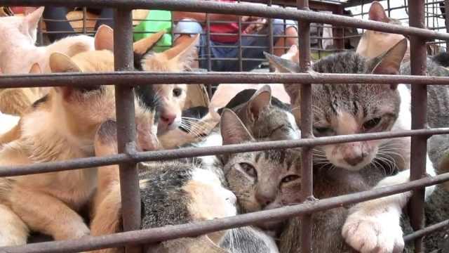 美众议院通过法案:禁止食用猫狗!