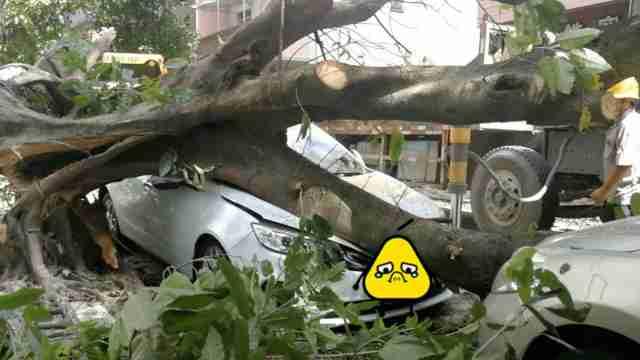 大树被台风吹倒,全新小车惨被砸扁