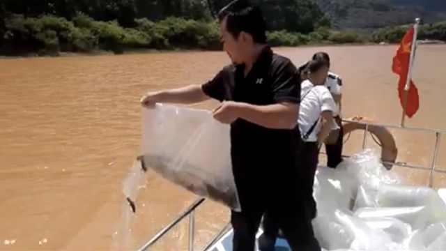 江河过度捕捞,4人花7万放流2万条鱼