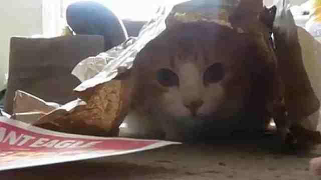 猫咪:变个魔术,你们猜我在哪