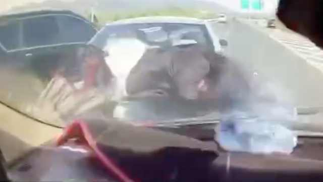高速车祸不挪车变二次事故,5人被撞
