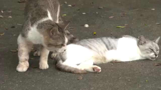 日本猫咪咖啡馆,专门收养流浪猫