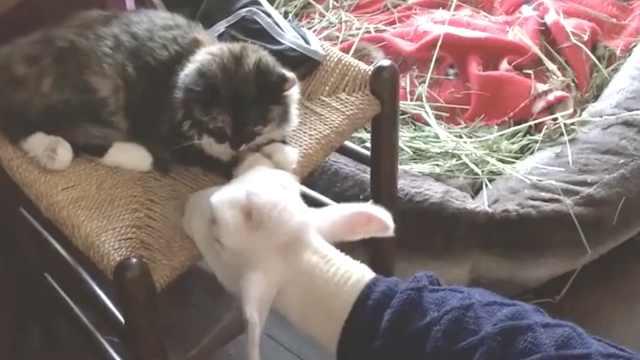 小羊和猫咪,超越种族的暖心友情!