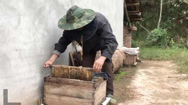 老人养野蜂脱贫,带村民