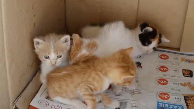 涨姿势!养猫的人容易犯的7个错误