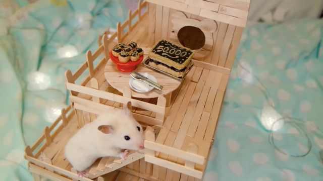 精致!主人给仓鼠做迷你巧克力蛋糕
