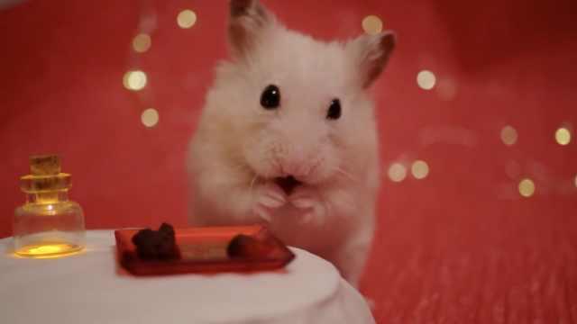精致!给仓鼠做迷你草莓巧克力糖果