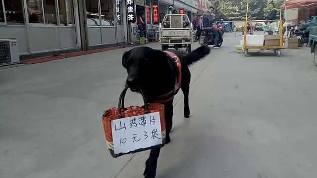狗狗每天叼广告牌,帮主人招揽生意