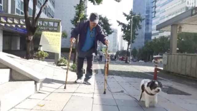 做你的拐杖:爷爷和狗狗的暖心故事