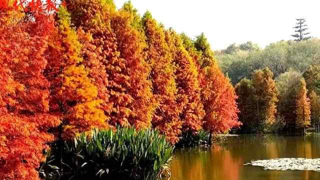 南京东郊,开启秋季童话世界!