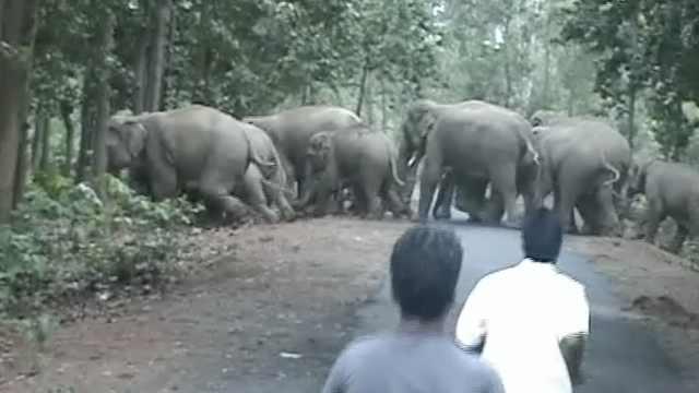 印百头野象闯进村,毁房屋攻击村民