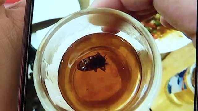 聚餐时茶水倒出蟑螂,壶盖一开惊了
