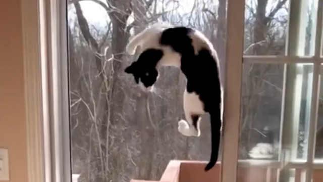 一些忍者猫的实力