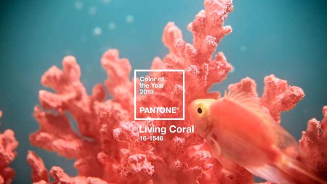 Pantone发布2019年度流行色:锦鲤色