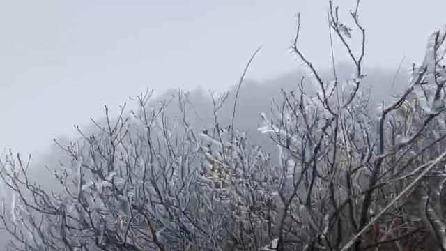 广东迎初雪,游客太兴奋爬山顶唱歌