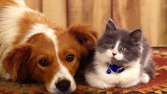 人类最喜欢的宠物,是猫还是狗?