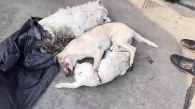 他毒死3狗向民警