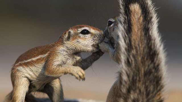 松鼠的尾巴到底有什么作用?