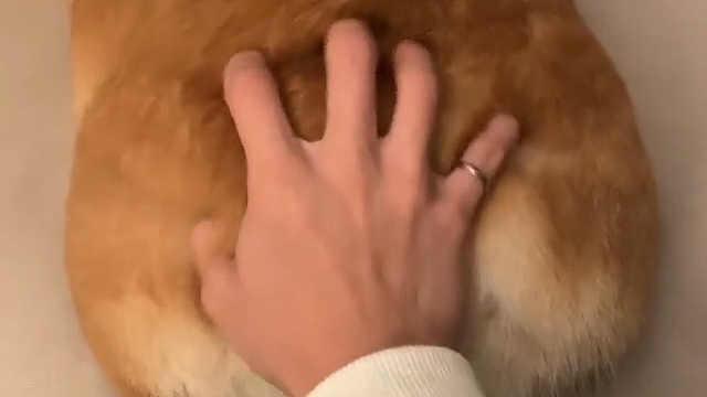 手感看起来很不错啊