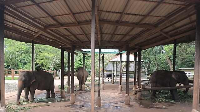 探秘斯里兰卡品内维拉大象孤儿院