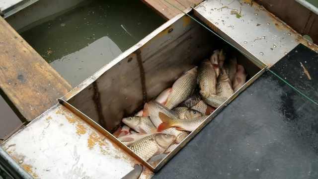 14人非法捕鱼团伙被端:缴鱼千余斤
