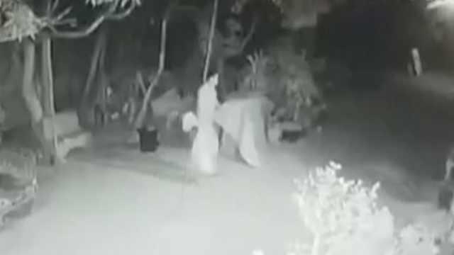 男子凌晨偷鸡被抓:已偷12次共88只