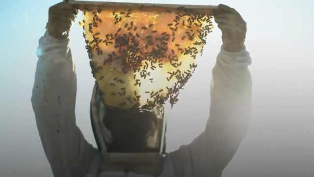 最新研究:昆虫将在本世纪灭绝