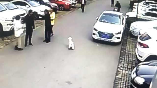 孕妻被狗吓到,丈夫赶狗起冲突受伤