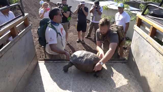 消失110年!极度濒危巨龟再现海岛
