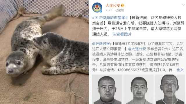 斑海豹盗猎案:2人自首,仍有2人在逃