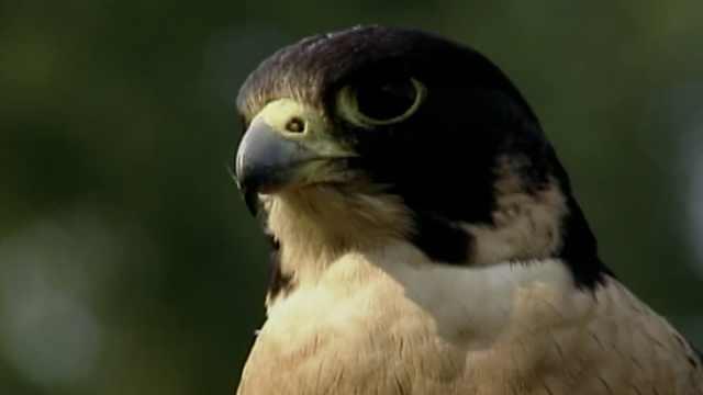 最新研究:1200个物种受到严重威胁