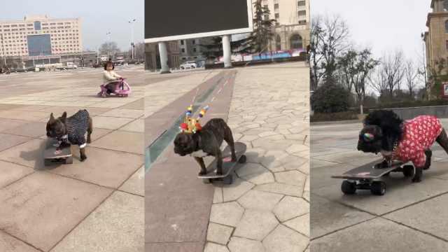 做最靓的崽!社会狗戴大金链玩滑板
