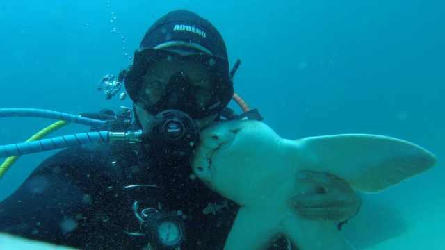 潜水员和鲨鱼成为了好朋友