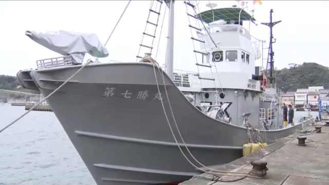 重启商业捕鲸!日本调查捕鲸开始
