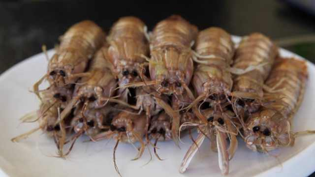 皮皮虾会站立?4月是它最肥美的时候