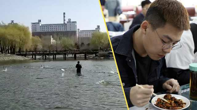 大学人工湖改造,2千斤鱼免费送师生