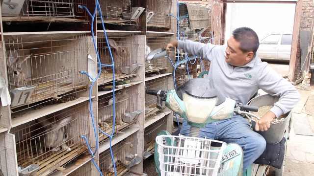 小伙双腿残疾,靠养800只兔子自立