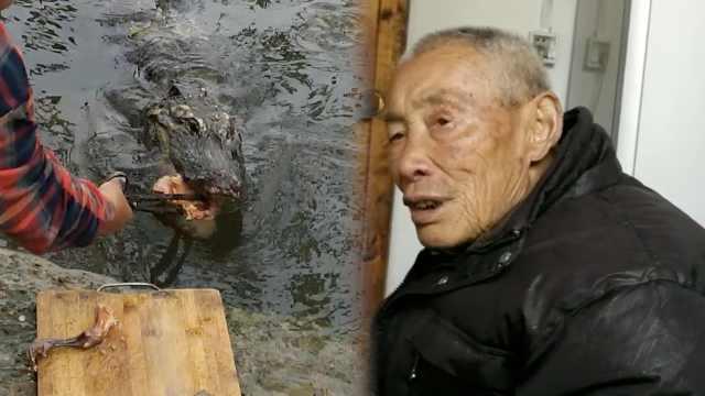 8旬翁护扬子鳄30多年:活一天陪一天