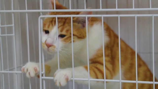 在笼子关了三天的橘猫会有什么改变