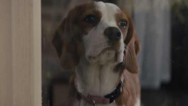 一条狗的使命2MV:孤单时你想起谁