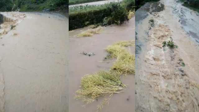 湖北突降大暴雨,田里油菜被冲走
