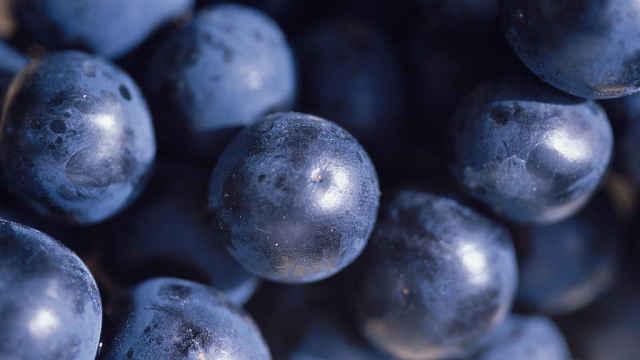 葡萄酒的基因,从古罗马起就没变过