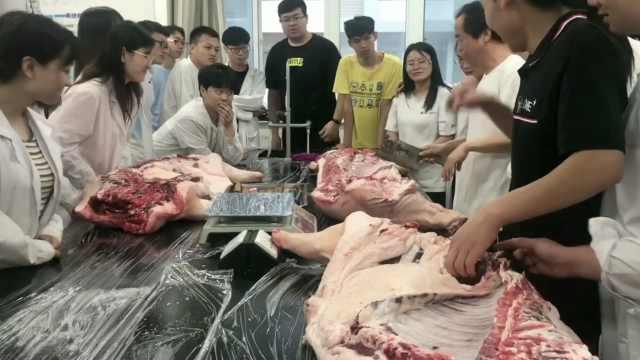 高校课堂解剖生猪,同学:女生更兴奋