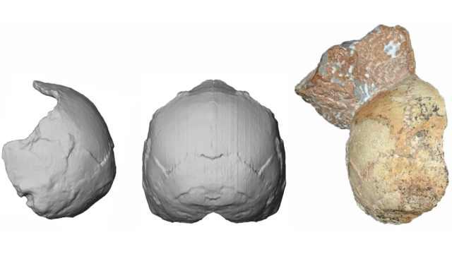 21万年前!欧亚大陆最古老智人化石