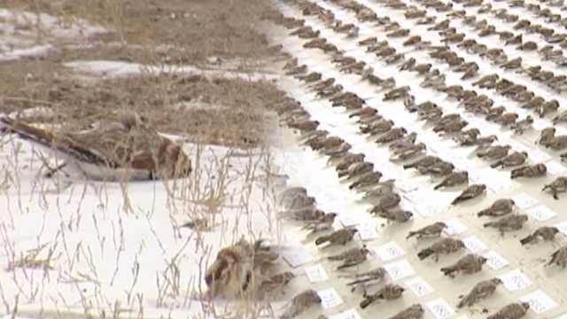 3男毒杀4484只百灵鸟,被判赔440万