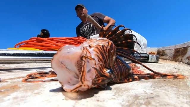 地中海的狮子鱼破坏海洋生态