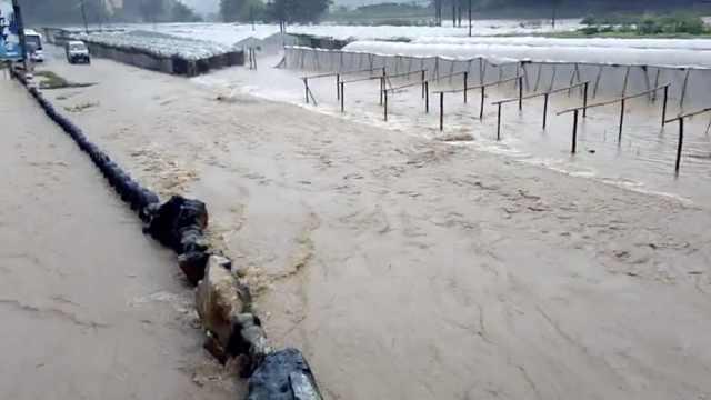 桂林暴雨致洪涝,村民百亩葡萄受灾