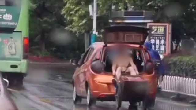 他坐后备箱拉车避雨,老婆开车被罚