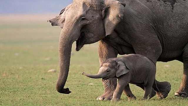 大象需要我们帮助它改变命运