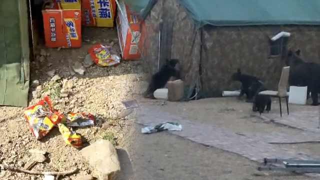 4熊闯驻防点蹭吃蹭喝,方便面撒一地